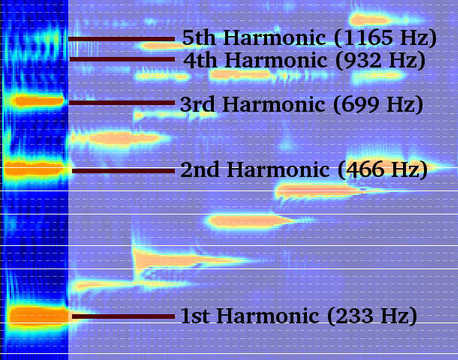 Harmonics of B♭ (log frequency scale)